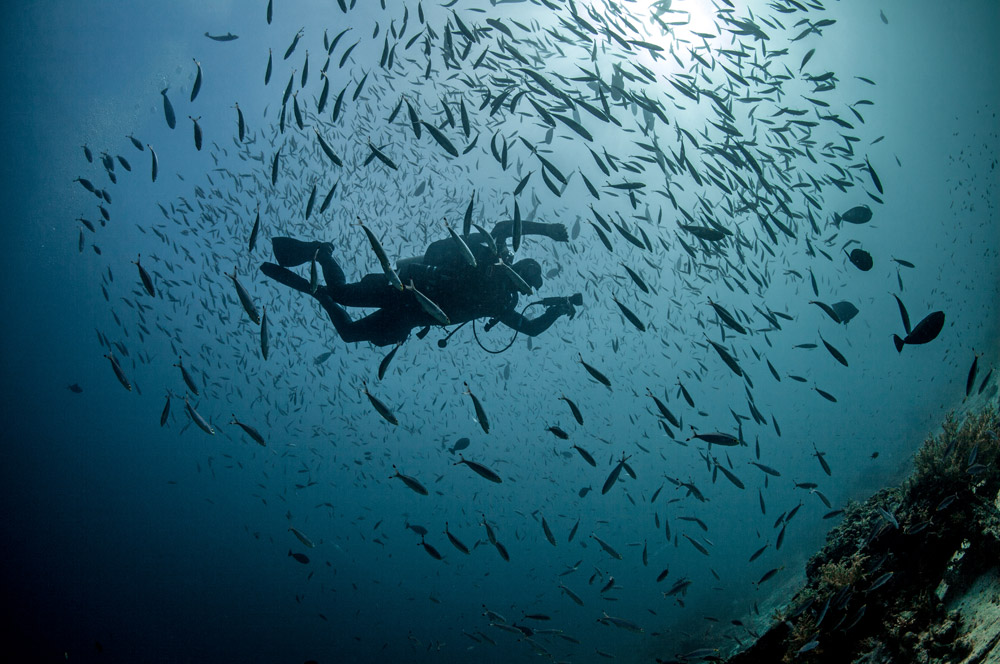 diving-mali-plavnik-wall-krk-croatia
